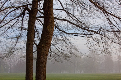 Taughannock trees
